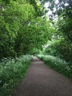 Flitch Way between Clapp Bridge and Rayne © Friends of the Flitch Way