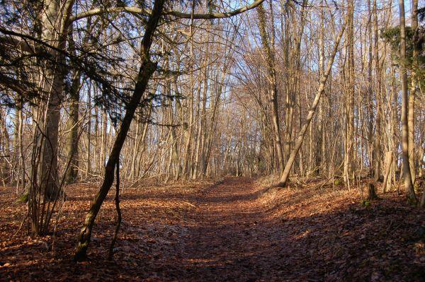 Oxfordshire Way Near Warburg Nature Reserve
