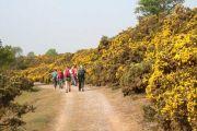 Suffolk Coast and Heaths Path