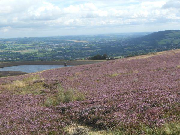 Hawksworth Moor looking towards Otley