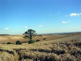 Lincolnshire Wolds © Grimsby & Louth Ramblers