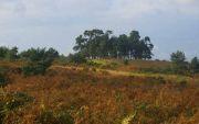 Ashdown Forest Perambulation