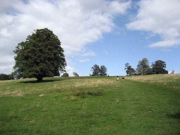 Hill above Well Place Farm near Penshurst - Chris Heaton