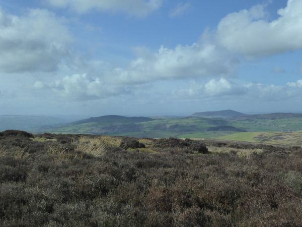 On the Long Mynd