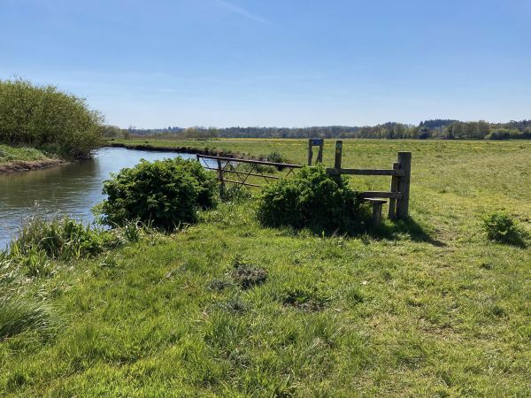 Water meadow just south off Ringwood - Jonathan Dowe