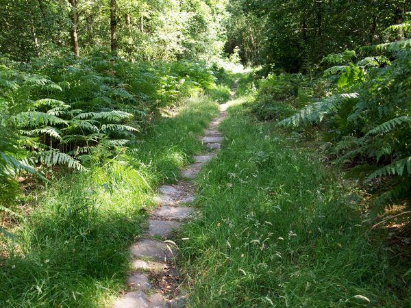 Trod through woodland up Reynard's Crag