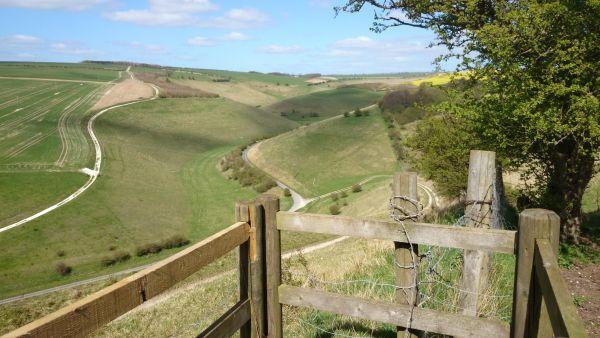 Millington Pastures