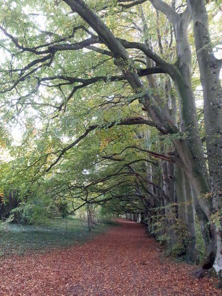 Arcade of trees