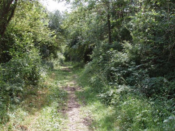 Bridleway, course of Roman Road, Sandford Brake, David Hawgood, Geograph