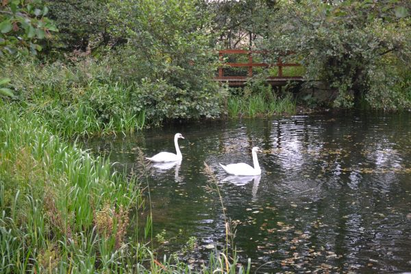 Mill Pond near Tong Park, Baildon