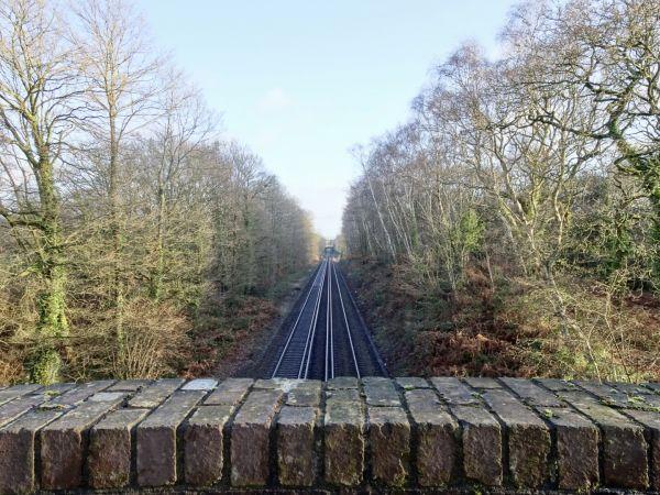 Strawberry Trail (Jonathan Dowe)