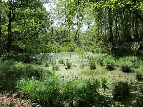 Pingo Ponds (Visit Norfolk UK)